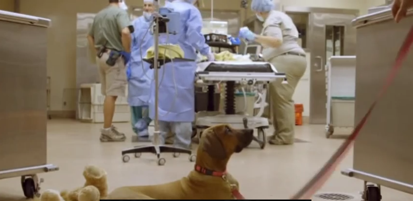 Loyal Puppy Camps Out In Operating Room During Surgery On A Surprising Best Friend