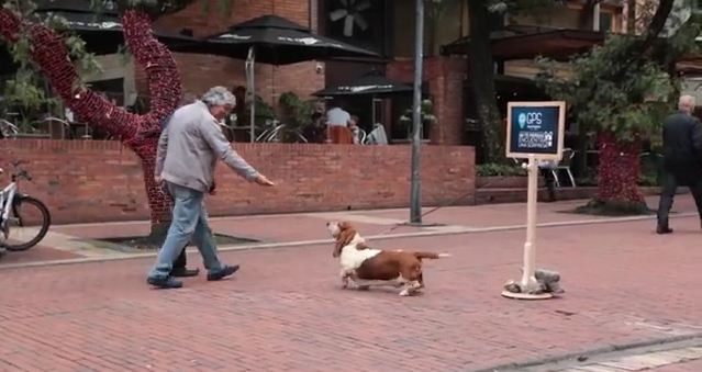 Basset Hound Leads Unsuspecting Pedestrians To A Big Surprise