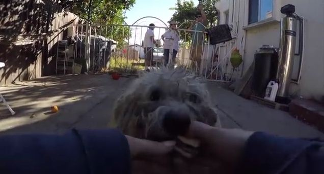 With 3 Inches Of Matted Fur, You Will Not Believe What This Dog Looks Like After Rescue
