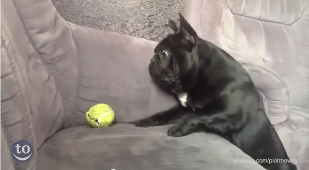 These Loveable Dogs Just Can't Figure Out How To Fetch! Get Ready To Laugh Out Loud!