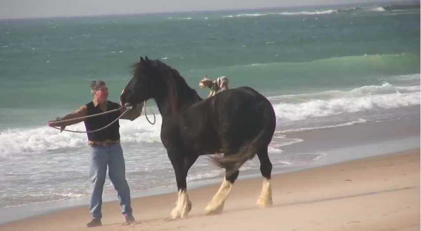 When You See This Mare Running On The Beach With Her Pals, Your Heart Will Swell