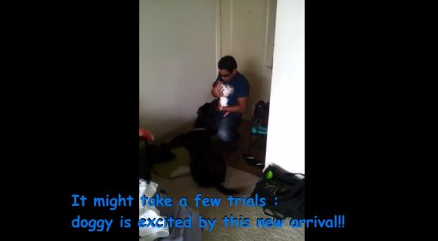 Dog Accepts And Welcomes Home New Baby In An Awesome Way