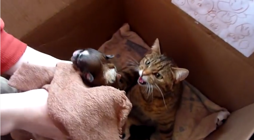 This Momma Cat Didn't Plan For One More Baby, But She Gladly Accepted!