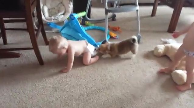 Baby Reacts In The Cutest Way When A Puppy Starts Pulling On His Diapers
