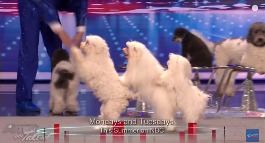 These Incredible Dogs Jump Rope, Dance, & Do The Conga