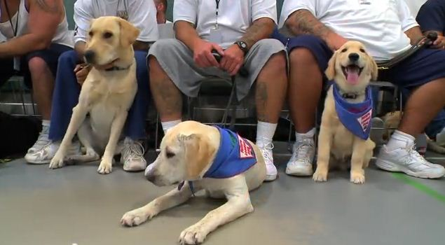Puppies Raised By Prison Inmates Become The Good Citizens They Wish They Could Have Been