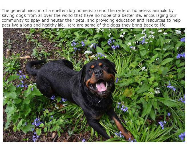rescue_dogs_01