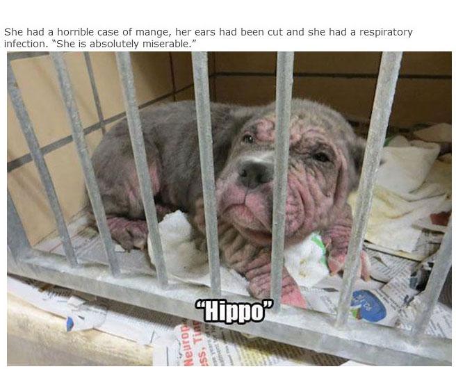 rescue_dogs_03