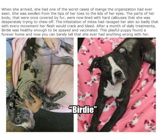 rescue_dogs_05