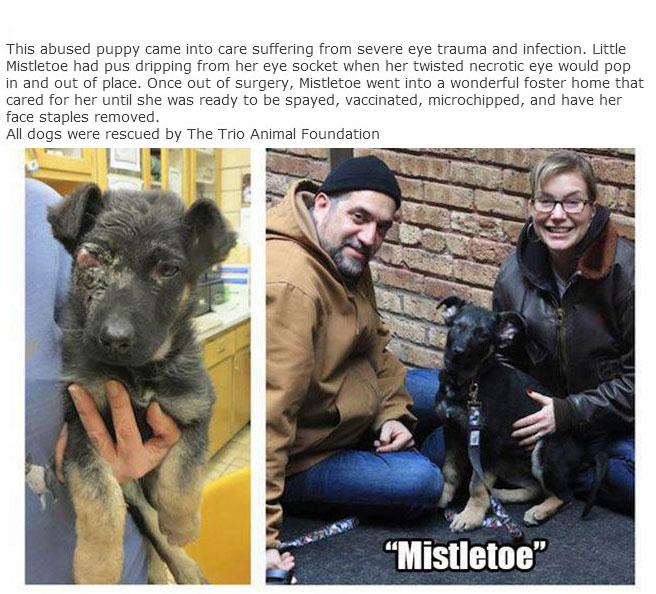 rescue_dogs_11