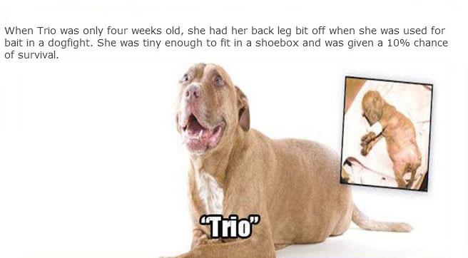 rescue_dogs_12
