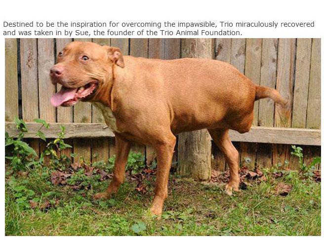 rescue_dogs_13