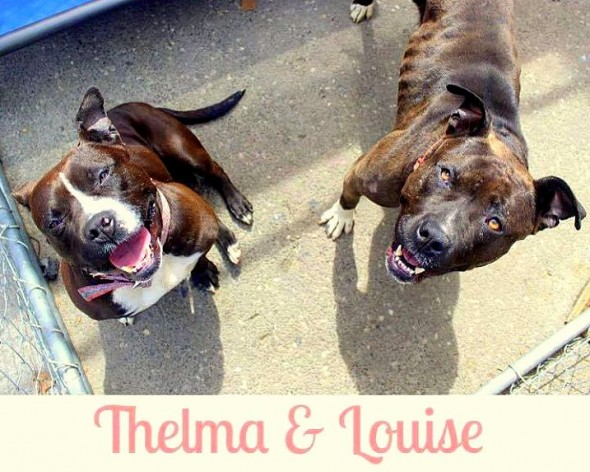 Bonded Pair Thelma & Louise Deserve a Happy Ending