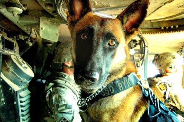 New Bill Would Retire Military Dogs With Their Handlers