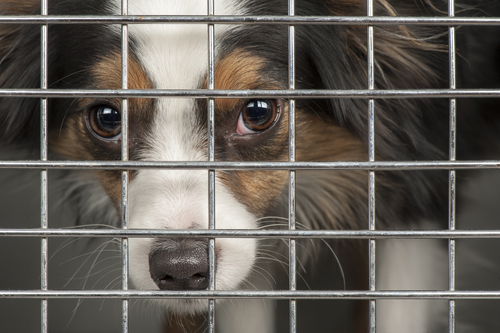 To Crate Or Not To Crate? A Closer Look At An Important Question All Dog Owners Must Face