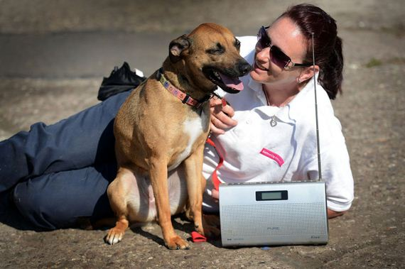 The hound of music: Rescue dogs listen to BBC Radio 2 to calm down