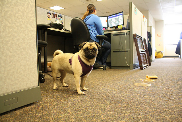 Take Your Dog To Work Day Tips Straight From The Experts