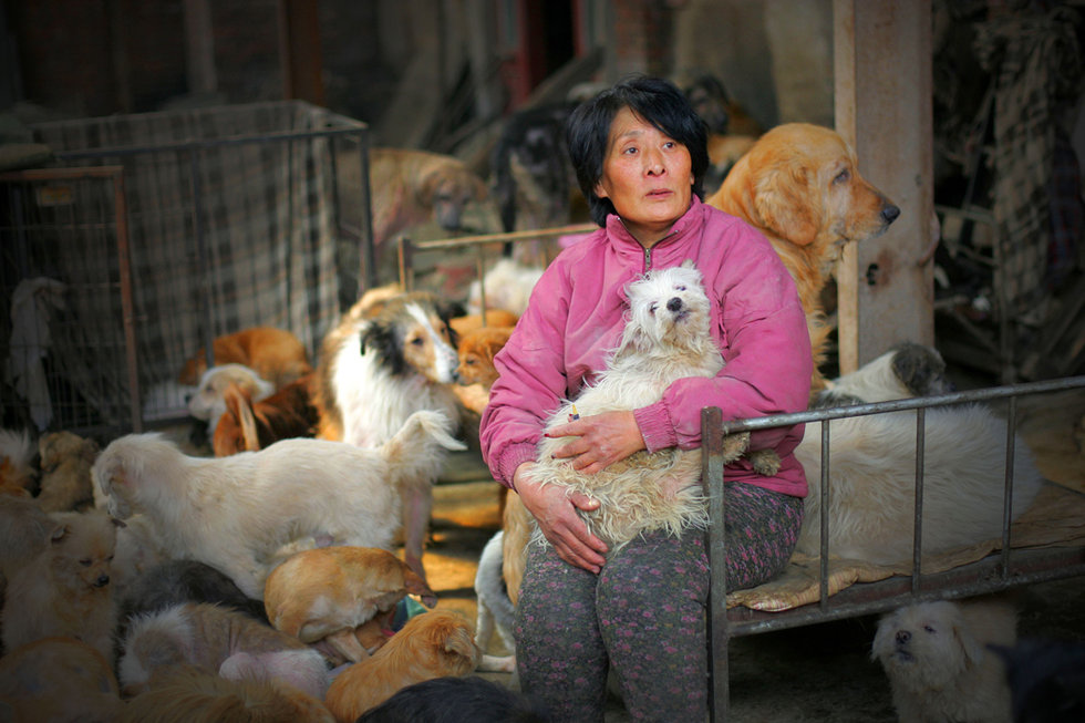Retired Teacher Spends Life Savings Buying Stray Dogs, Saving Them from Yulin Festival