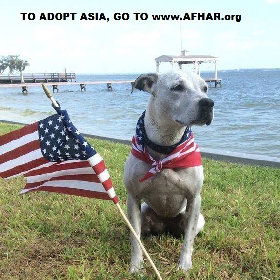 Asia Has been Waiting For A Home For Two Years – Let's Find Her One!