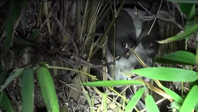They Found This Injured Pup Shaking In The Bushes…But She Wasn't Alone