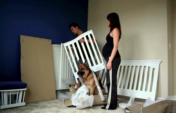 Dogs Steal the Show in This Time-Lapse Pregnancy Video
