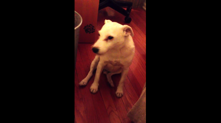 When This Guilty Dog's Owner Discovered His Mess, His Reaction Is Hilarious