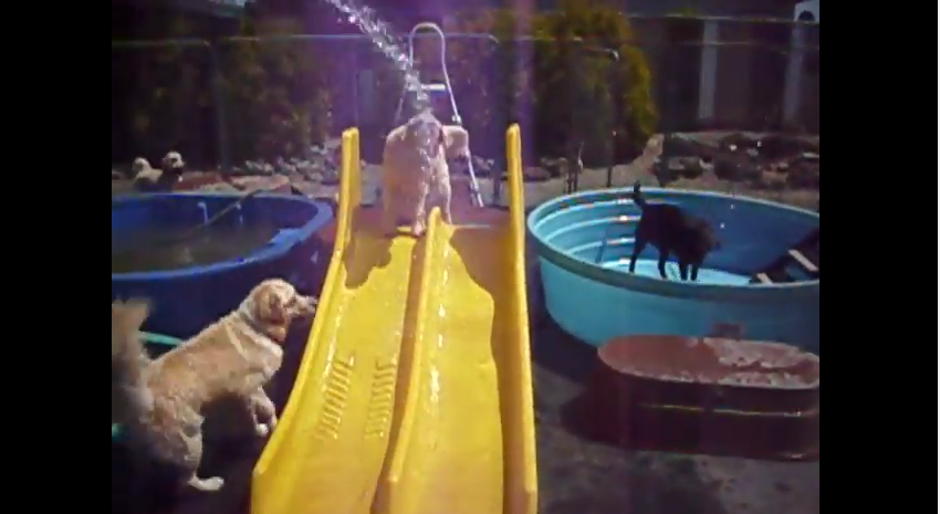 Water Slide at the Happy Puppy Park!