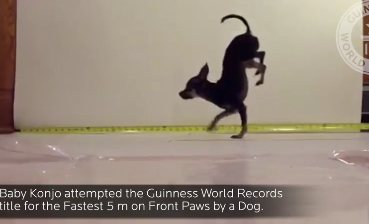 This Dog Just Smashed The World Speed Record – Wait 'Till You See What For