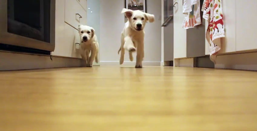 These Pups Grow A Lot Over 9 Months, But Their Love For Dinner Time Remains