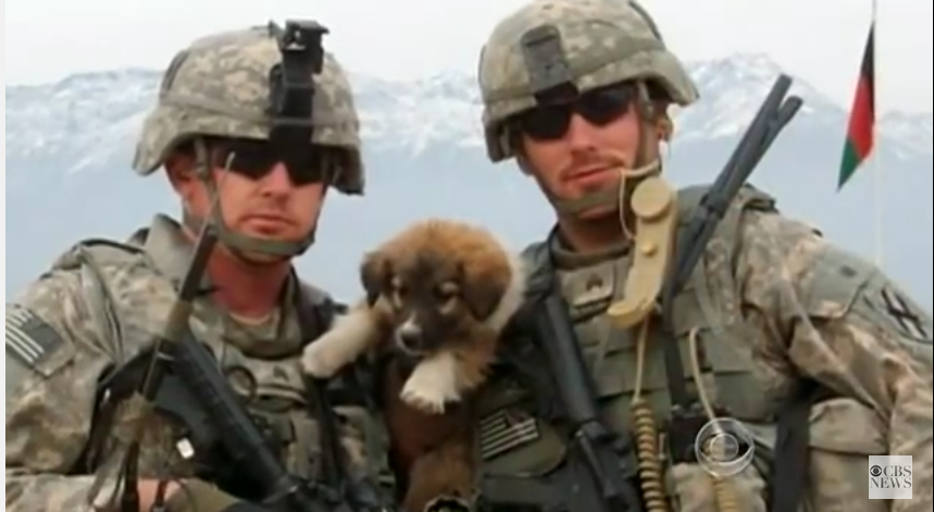 Soldier Reunites for the 1st Time With Stray Dogs Who Saved His Life in Afghanistan