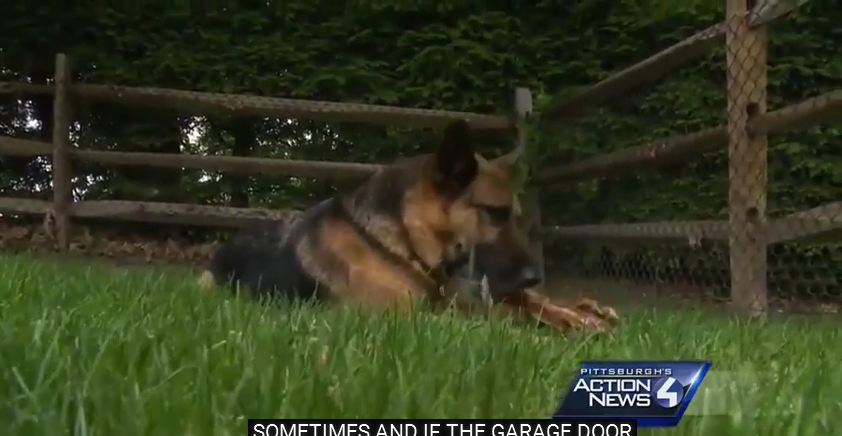 Police Dog Whose Officer Was Killed On Duty Returns Home To Love & Protect Slain Officer's Wife