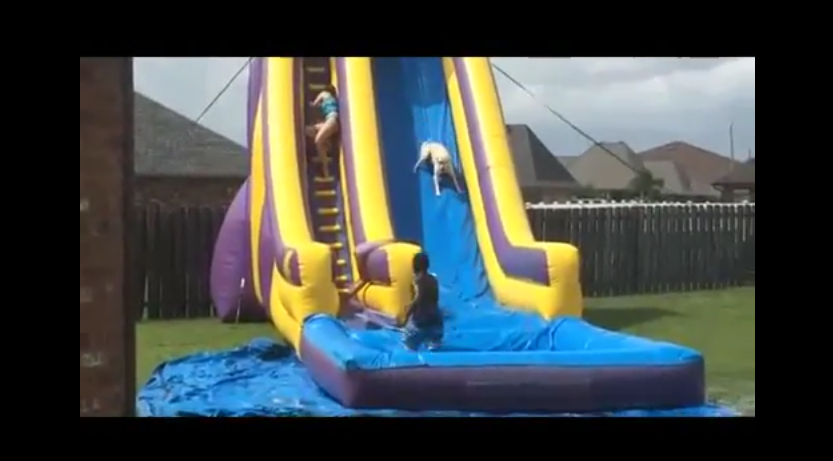 When The Dog Got Out And Bolted For The WaterSlide They NEVER Expected This