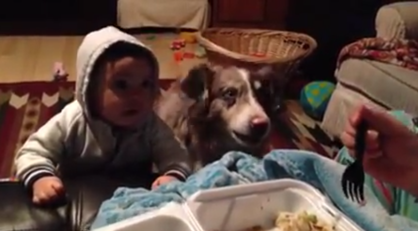 "Mom Tells Baby To Say ""Mama"" For A Bite Of Food, But The Hungry Dog Answers ""Mama"" Instead!!"