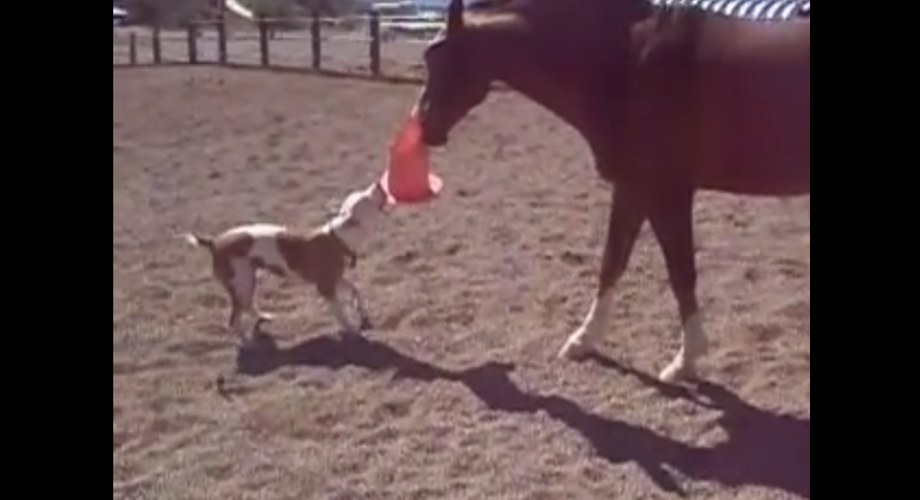 A Dog And A Horse Engage In The Cutest Game Ever