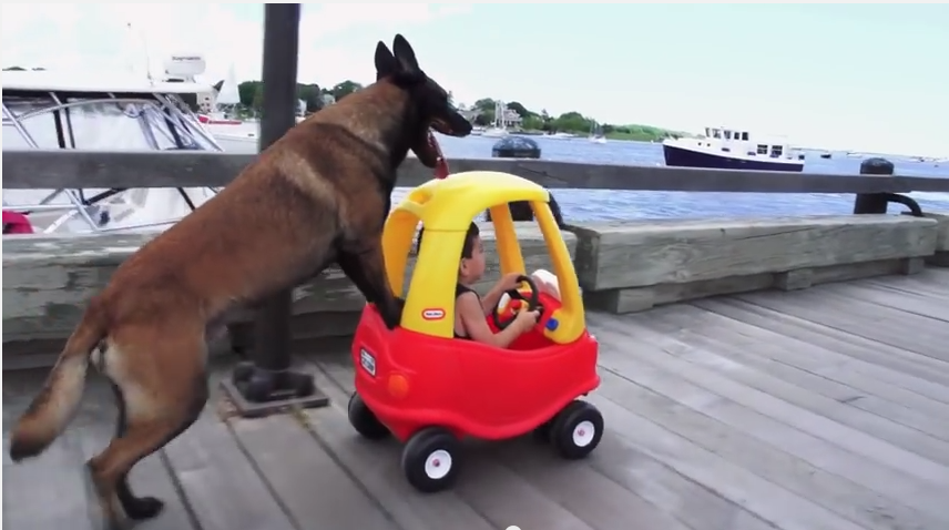 This Loyal Pup Pushing His Human In A Toy Car Will Put A Huge Smile On Your Face