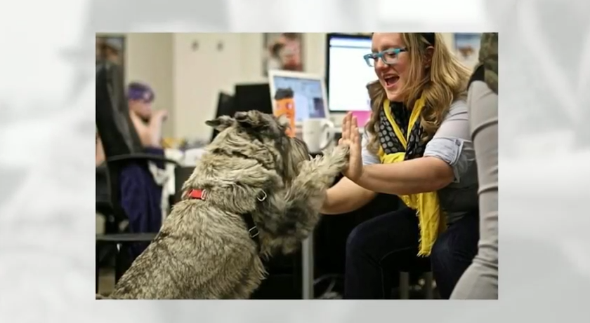 Have a Happy Take Your Dog to Work Day 2015