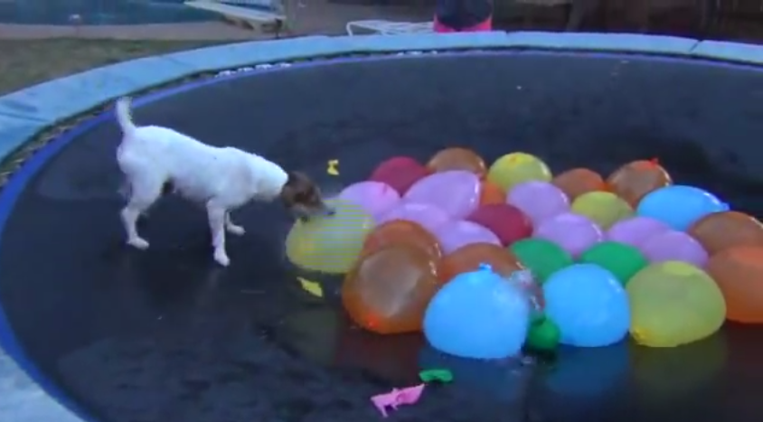 Spaz Kills All the Water Balloons on His Trampoline