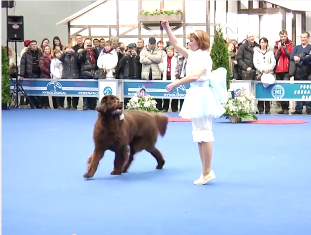 This Woman And Her Dog Perform An Elaborate Dance Routine…And It's Seriously Impressive