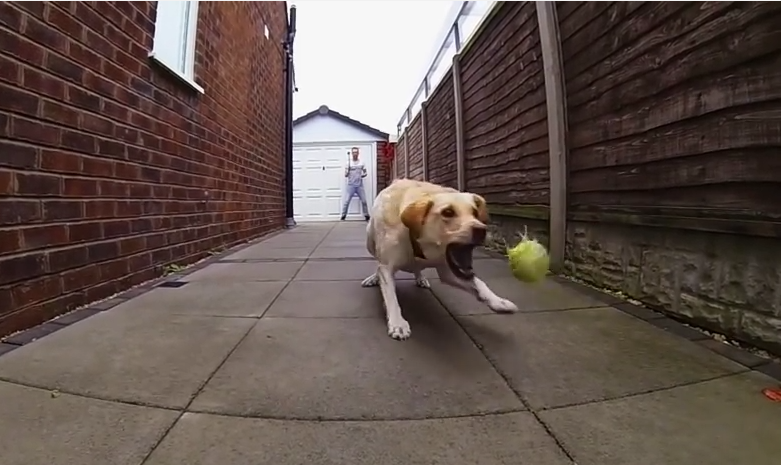 Dog Fetch Fails Captured On GoPro Camera. These Are Absolutely Hysterical!