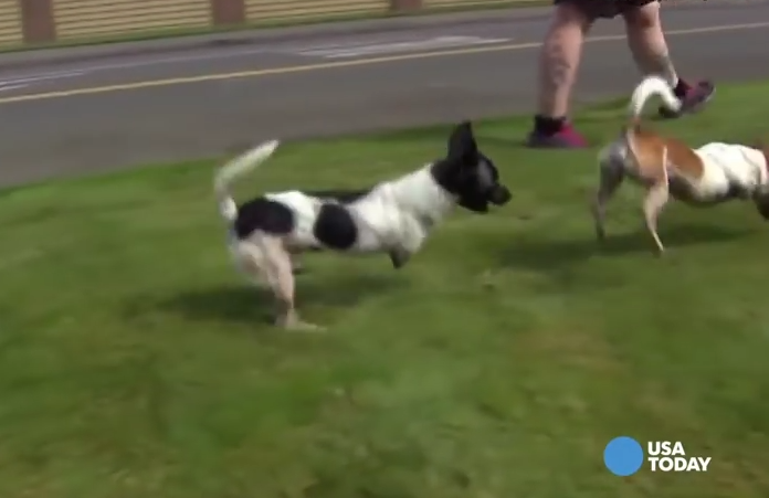 These Dogs Were Born Without Front Legs. Now They're Given A New Lease In Life!