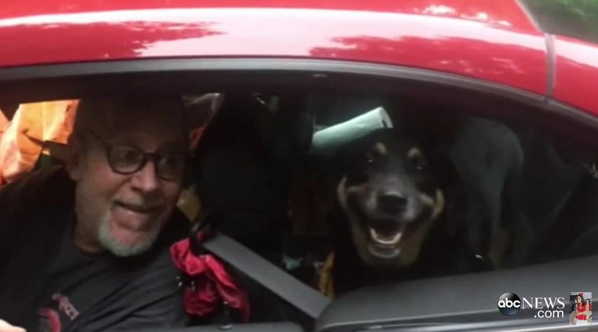 Abandoned Dog Who Chased After Her Former Owner's Truck Finally Finds a Forever Home!