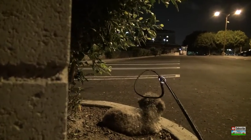 He Snuck Up On A Frightened Pup To Save Her — This Rescue Will Break Your Heart