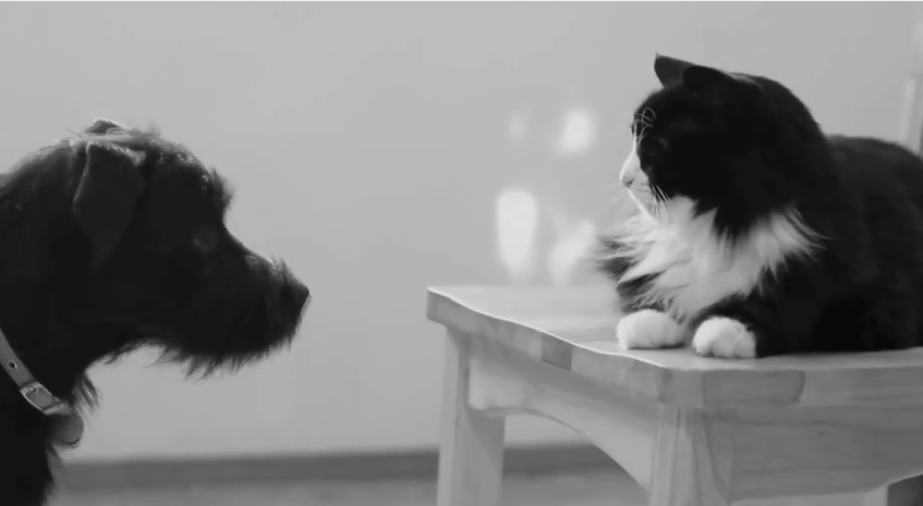 "Watch ""Reigning Cat, and Dog"" By HenriLeChatNoir"