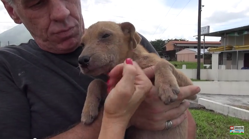 After These Puppies Are Rescued, My Heart Can't Handle What Happens Next!
