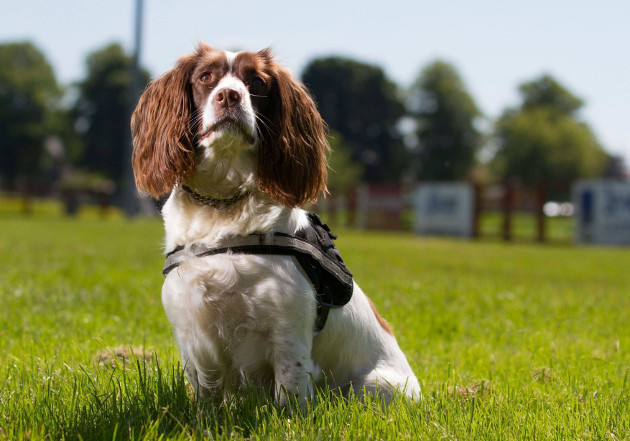 Meet Dixie the wonderdog – the crime-fighting canine who can even sniff out pirate DVDs