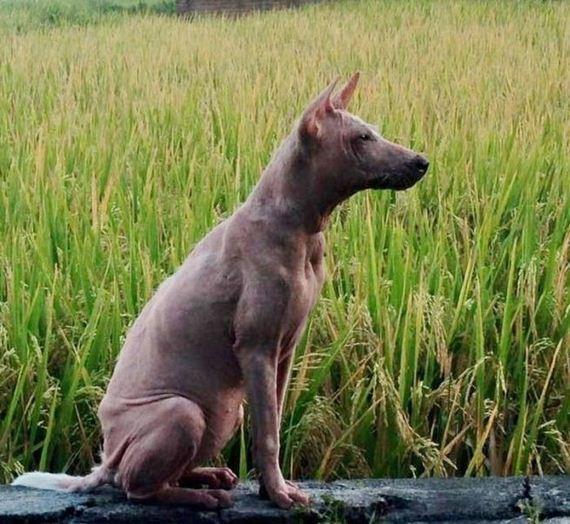 10-rescue_dogs_01