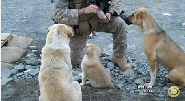 This Soldier Was Kind To 3 Stray Dogs. What They Did When A Suicide Bomber Approached Is Unbelievable!