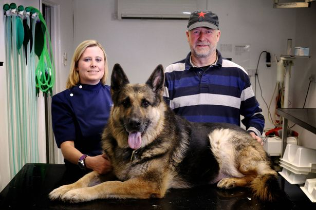 Murphy the dog needed lifesaving surgery after munching his way through SIX golf balls