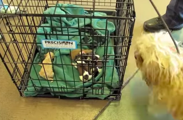 Pregnant Dog Was Abandoned While In Labor And When She Finally Sees Her Pups – WOW!