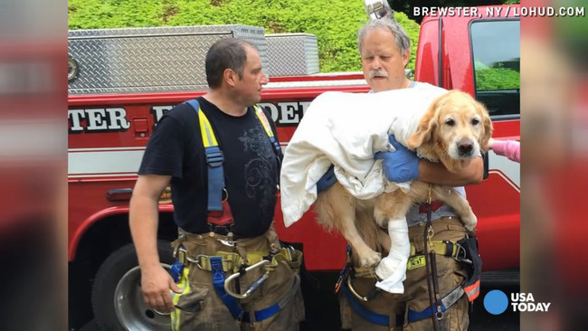 When You Find Out What This Hero Service Dog Did For His Blind Owner…Wow